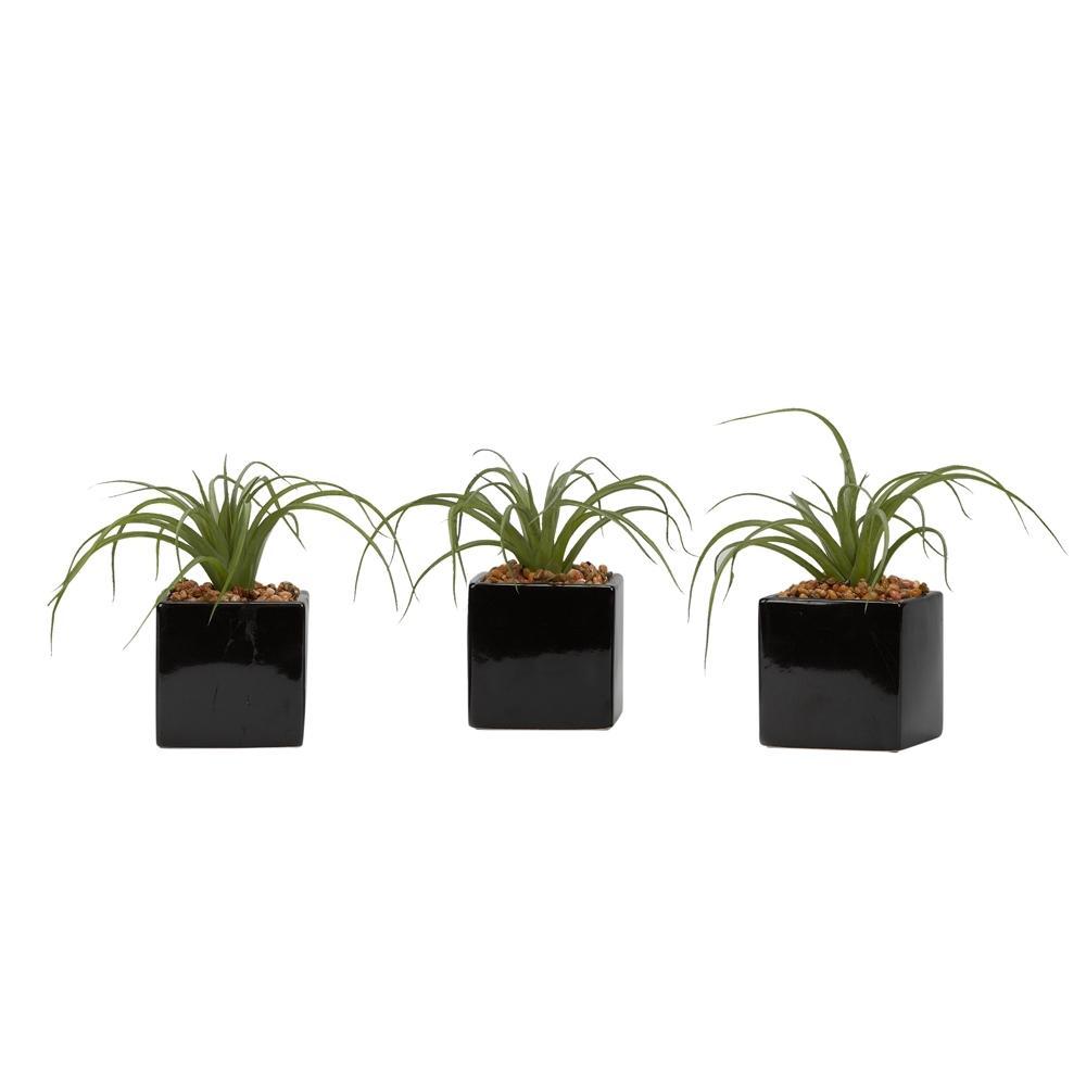D&W Silks Indoor Curly Tilandsia in Black Ceramic Cube (Set of 3)