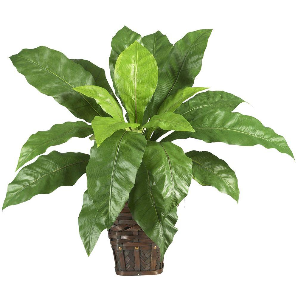 Nearly Natural 22 in. Bird's Nest Fern Silk Plant with Basket