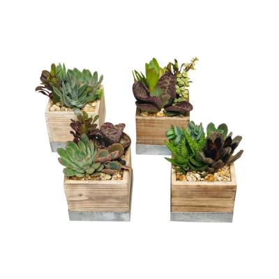 1.38 Pt. Succulent Plant Combo in 4 In. Wood Box (4-Units)