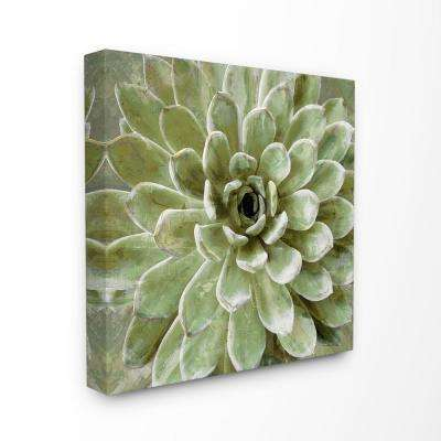 """24 in. x 24 in. """"Green Painted Botanical Succulent Bloom""""by Artist Daphne Polselli Canvas Wall Art"""
