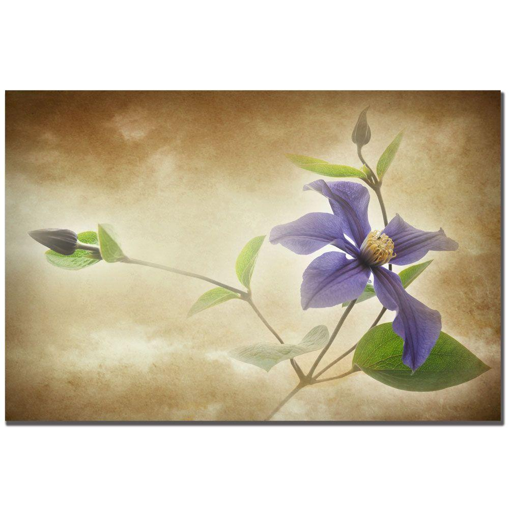 30 in. x 47 in. Clematis Lanuginose Canvas Art