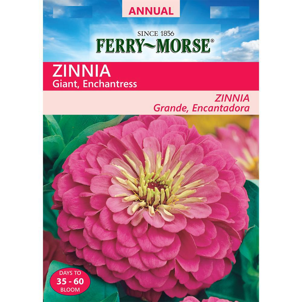 Ferry Morse Zinnia Enchantress Giant Double Flowered Seed 6756 The