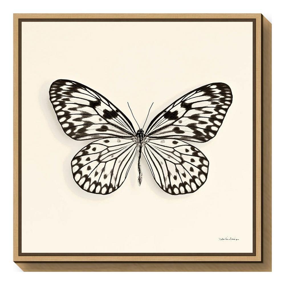 """""""Butterfly V BW Crop"""" by Debra Van Swearingen Framed Canvas Wall Art"""