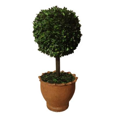 Laura Ashley 12 in. x 12 in. x 29 in. Tall Preserved Boxwood Ball in Clay Pot