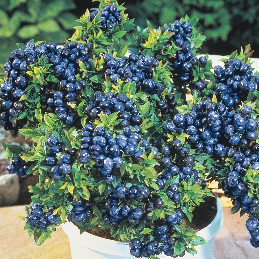 Blueberry Kitchen Decorations