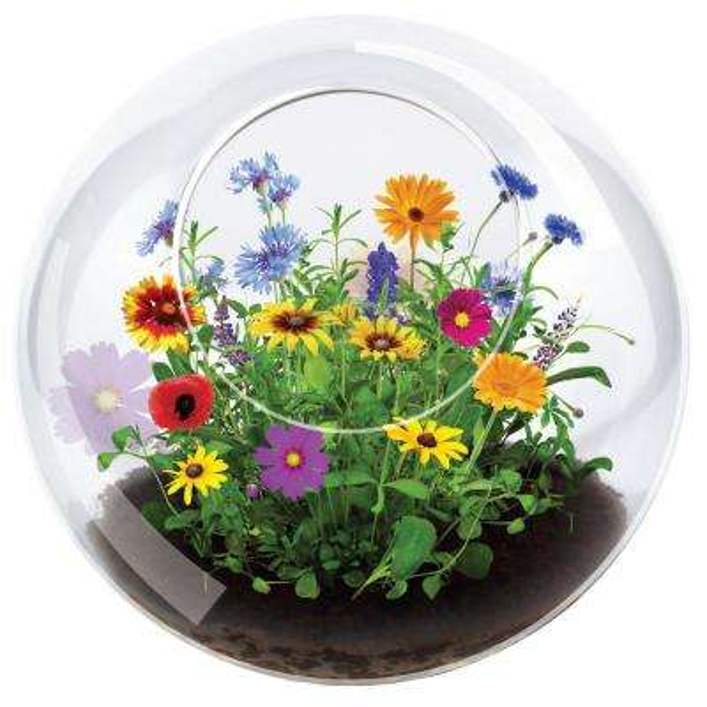 Classic Glass Clear Glass Wildflowers and Glass Indoor Garden Terrarium Indoor Garden Seed Starter Kit