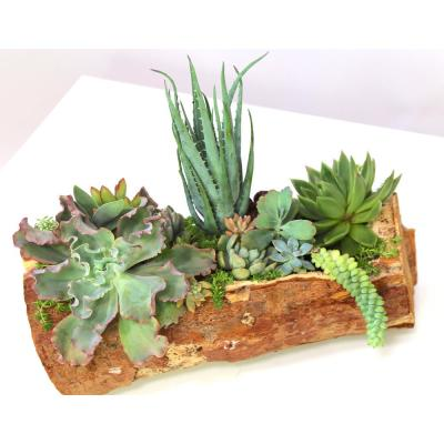 """14"""" Hand CarvedReclaimed WoodCenterpiece with Assorted LiveSucculents - Charleston"""