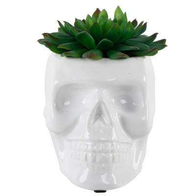 4.5 in. x 3.5 in. Artificial Succulent in White Ceramic Sugar Skull