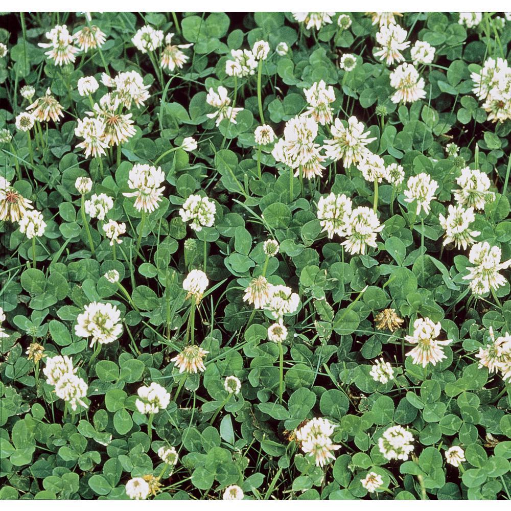 Gardens Alive! 1 lb. White Dutch Clover, Provides Erosion Control