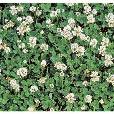 1 lb. White Dutch Clover, Provides Erosion Control