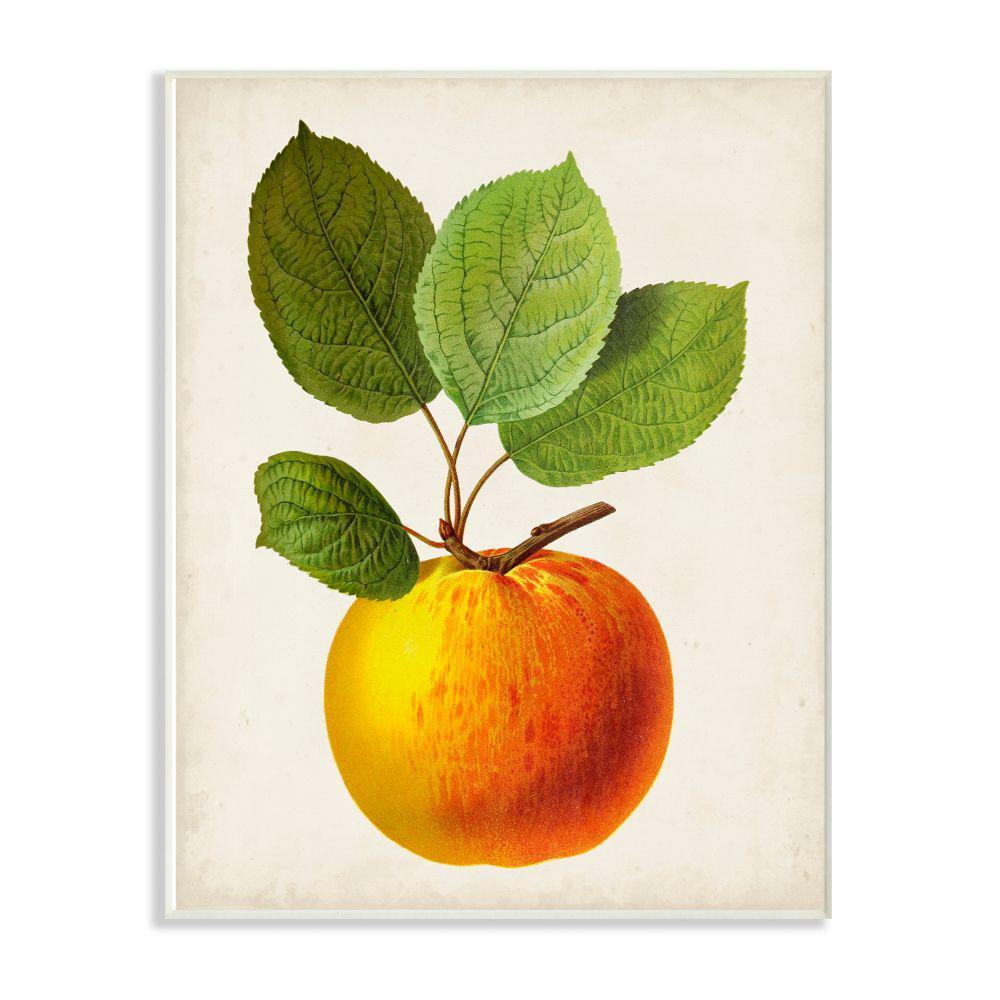"10 in. x 15 in. ""Vintage Fruit Apple Painting"" by Vision Studio Wood Wall Art"
