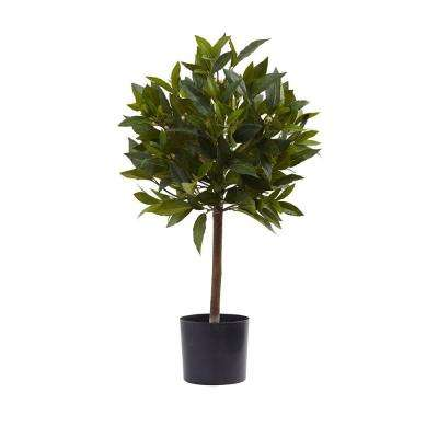 2 ft. Sweet Bay Mini Ball Topiary