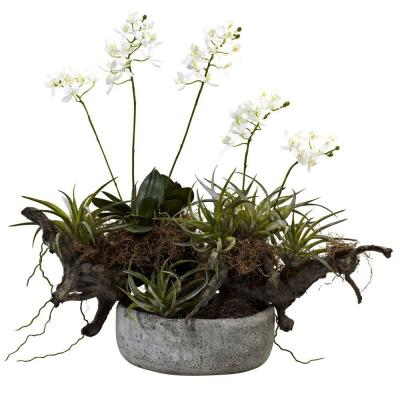 Orchid and Succulent Garden with Driftwood and Decorative Vase