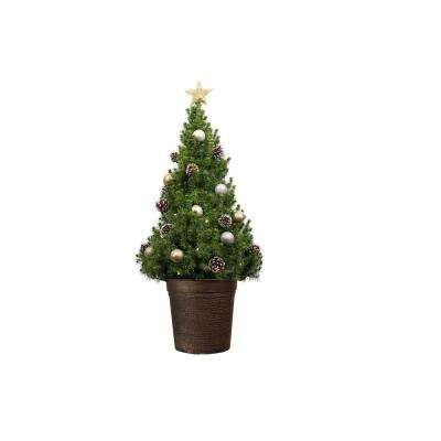 40 in. Dwarf Alberta Spruce Potted Christmas Tree