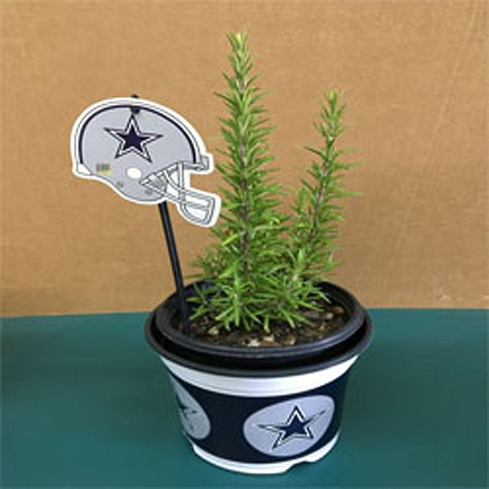 Barbecue Rosemary Herb Plant and a Dallas Cowboys Pot