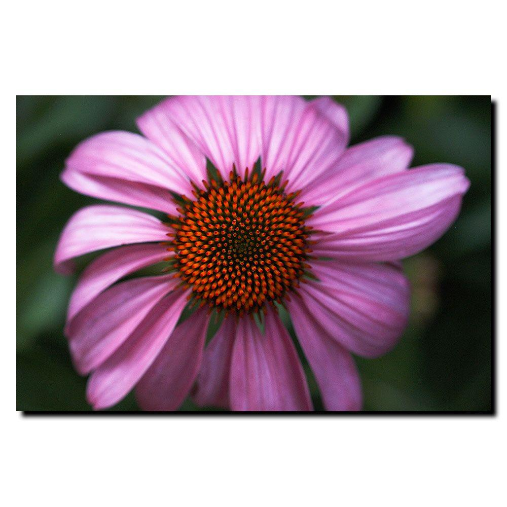 Trademark Fine Art 24 in. x 32 in. Purple Daisy Canvas Art