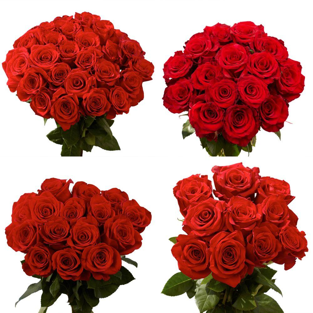 Globalrose Fresh Red Roses for Mother's Day (100 Stems)