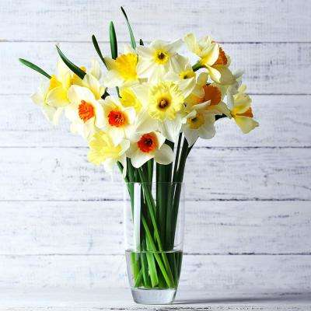 Daffodils Bulbs Cutting Garden Vase Mixture (Set of 25)