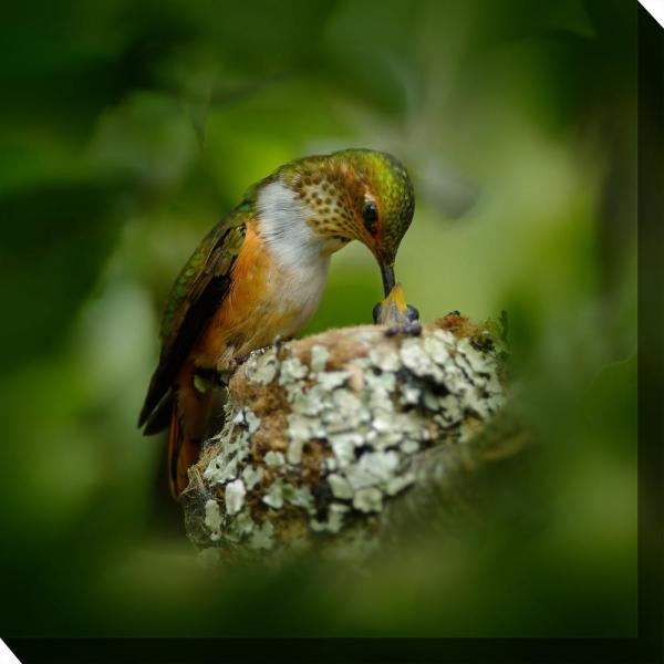 24 In X 24 In Hummingbird Nest Outdoor Canvas Wall Art