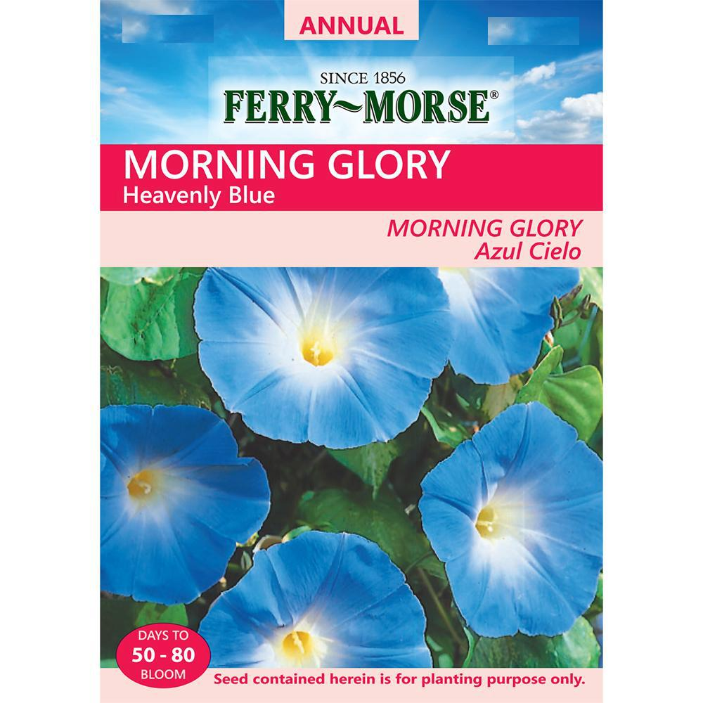 Ferry Morse Morning Glory Heavenly Blue Seed