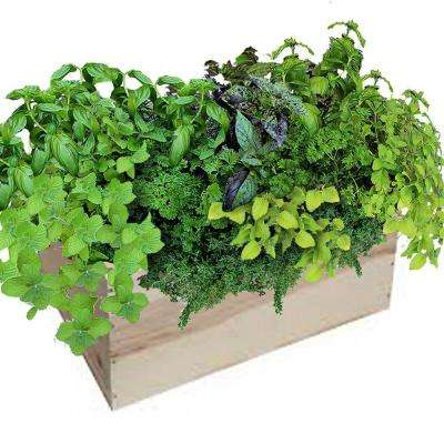 14 in. Herb Mix Grilling Herb Box
