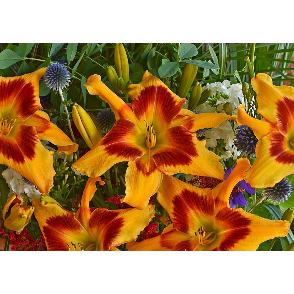 4.5 in. Qt. Rainbow Rhythm Yellow Flowers Tiger Swirl Daylily (Hemerocallis) Live Plant