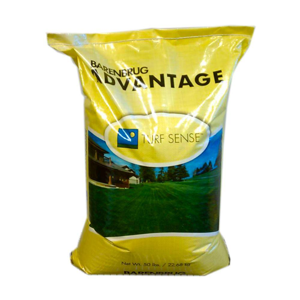 Barenbrug 50 lb. Barrister Kentucky Bluegrass Seed