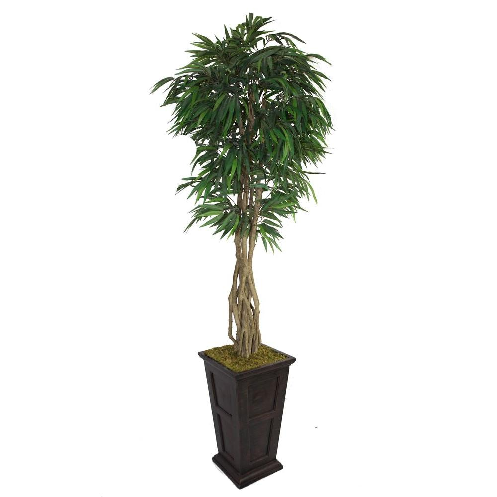 97 in. Tall Willow Ficus with Multiple Trunks in 16 in.
