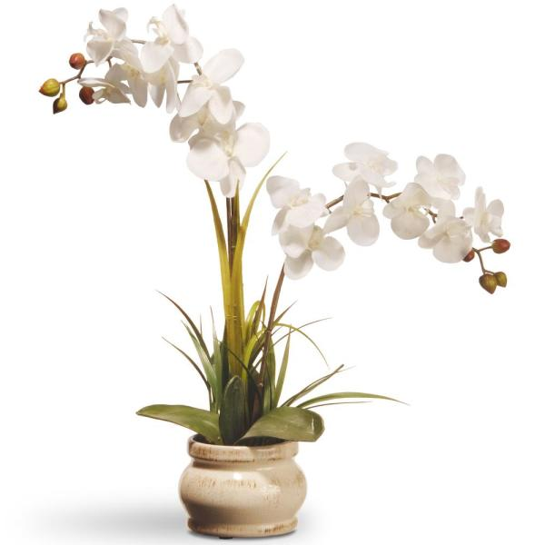 National Tree Company 24 in. Cream Colored Orchid in Ceramic Pot
