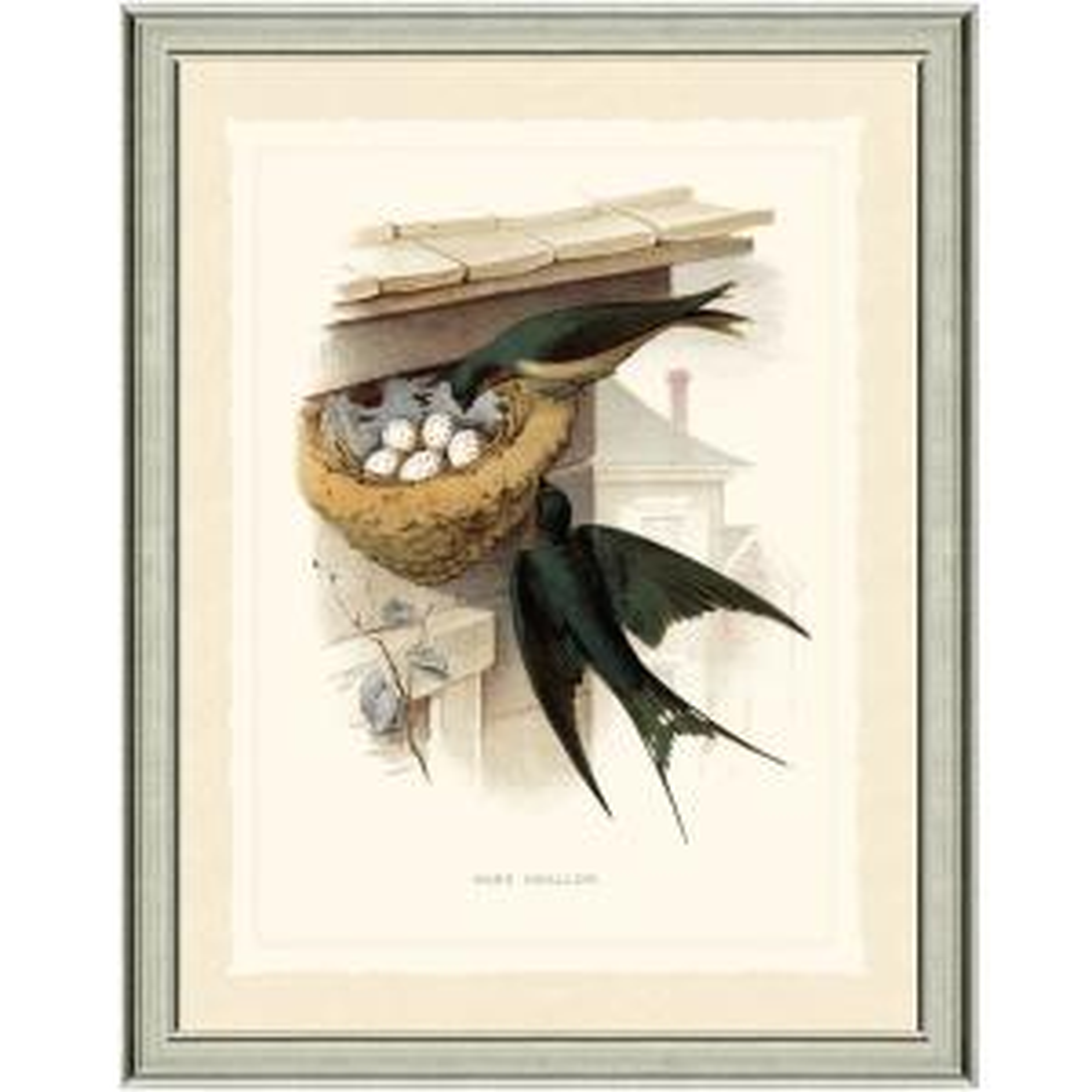 20 in. x 24 in. Swallow Framed Archival Paper Wall Art