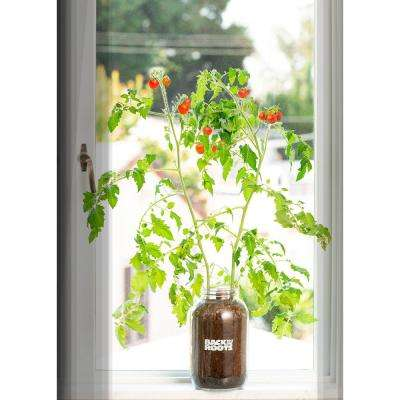 Self-Watering Planter Organic Cherry Tomato Plant