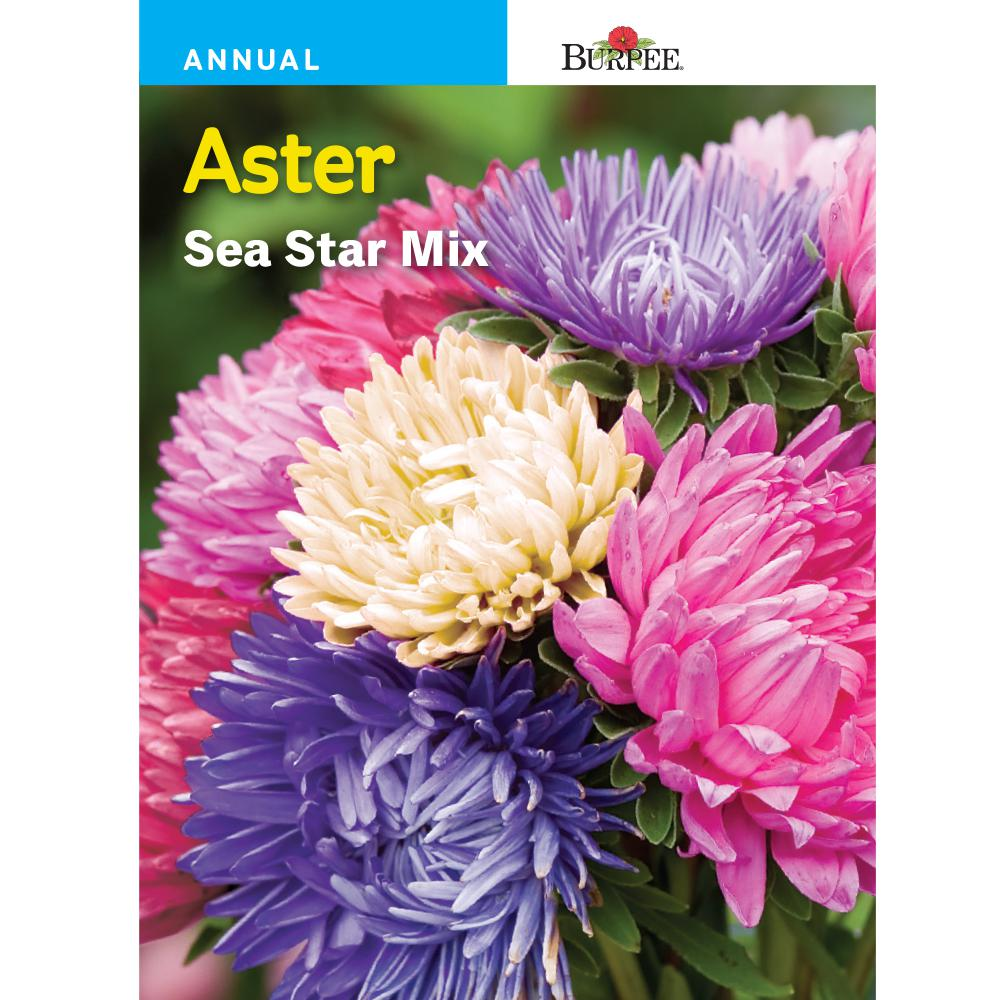 Burpee Aster Sea Star Mix Seed 36273 The Home Depot