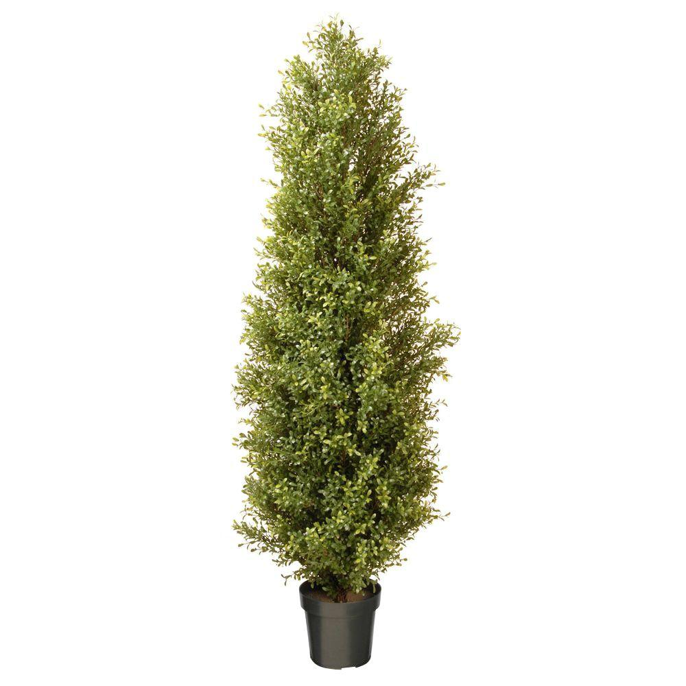 National Tree 72 in. Argentea Plant with Round Green Grow...