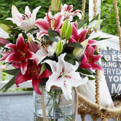 Oriental Fragrant Pink and White Lily Cut Flower Blend Bulbs (12-Pack)