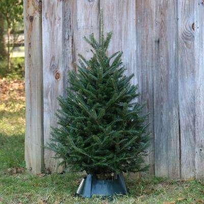 3 ft. to 4 ft. Freshly Cut Noble Fir Real Christmas Tree with Stand