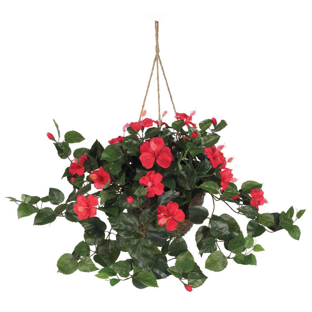 24 in. Hibiscus Hanging Basket
