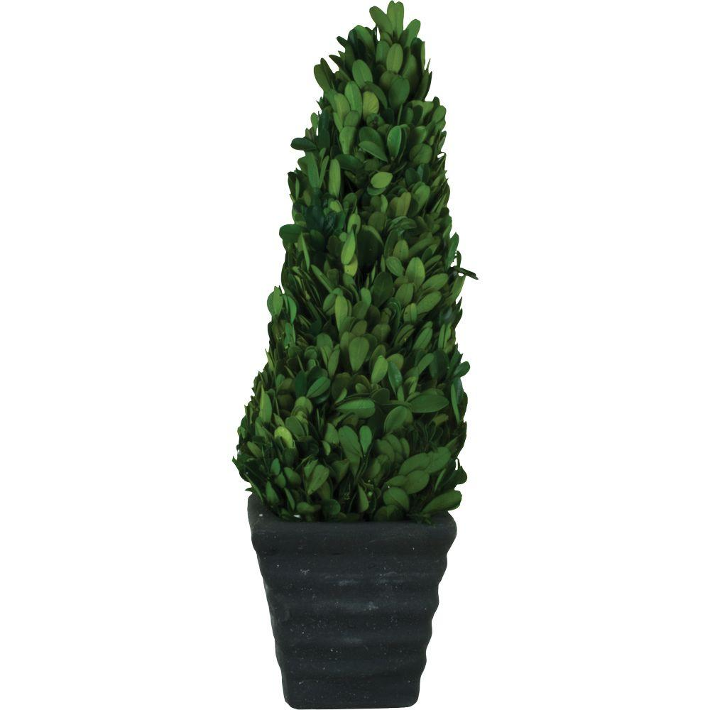Pride Garden Products 4.75 in. W x 15 in. H Preserved Boxwood Cone in Black Terracotta Pot