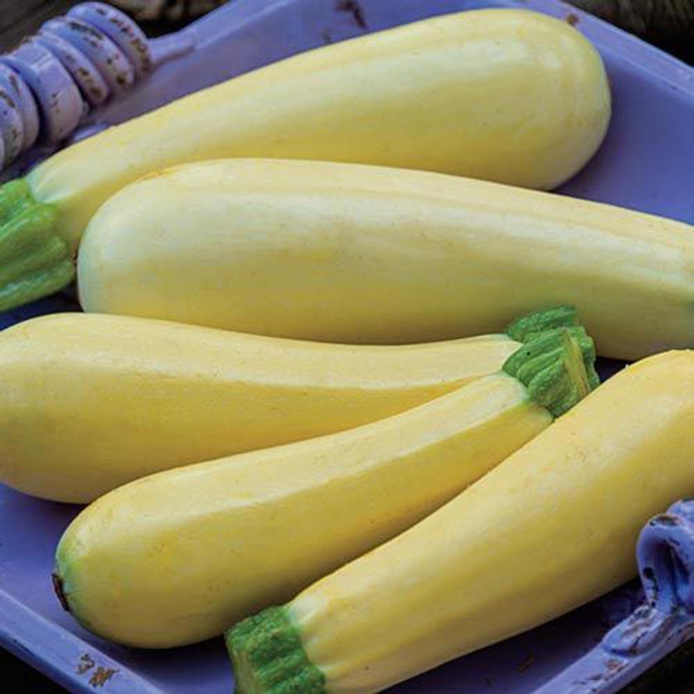Summer Squash Chiffon Hybrid (25 Seed Packet)