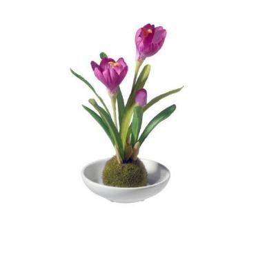 9 in. Potted Crocus Plant