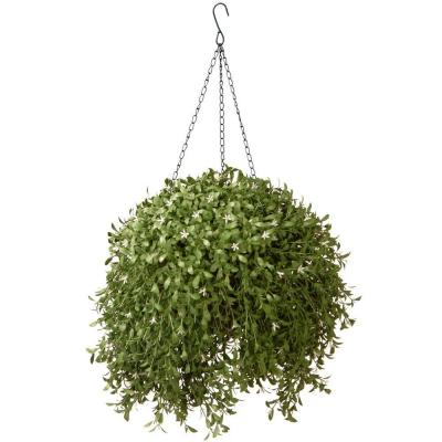 18 in. Hanging Basket Argentea Plant