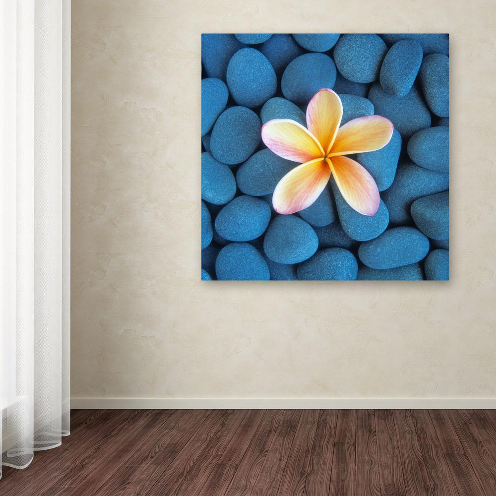 "Trademark 18 in. x 18 in. ""Plumeria and Pebbles 6"" by Dav..."