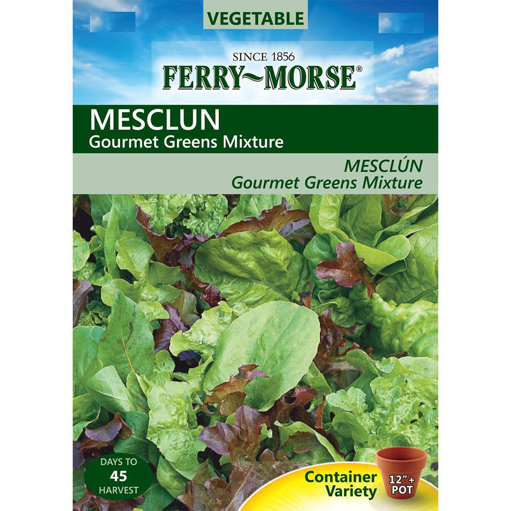 Mesclun Gourmet Greens Mixture Seed