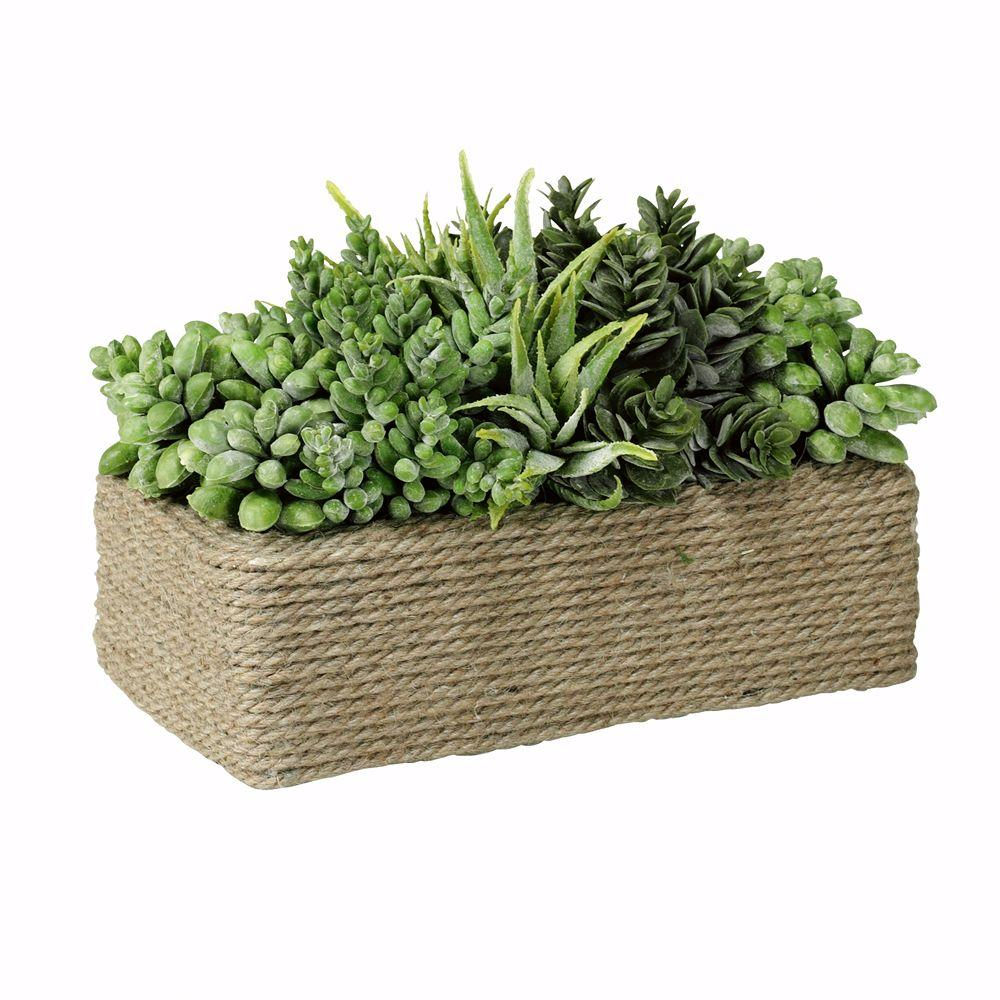 Home Decorators Collection 8 in. x 6 in. Green and Terra Succulents in Rectangular Wound Rope Pot