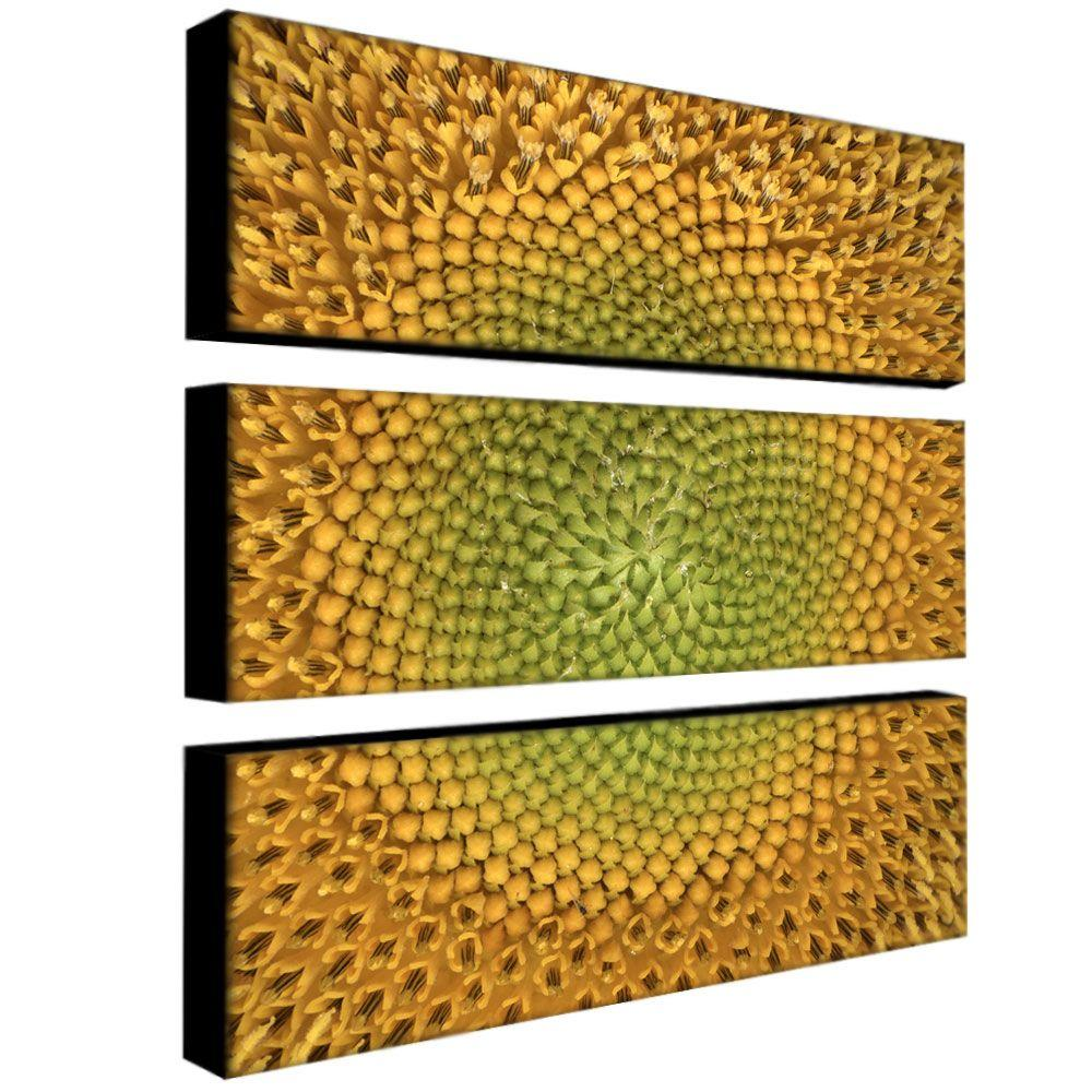 Trademark Fine Art 10 in. x 32 in. Sunflower by AIANA 3-Piece Canvas Art Set