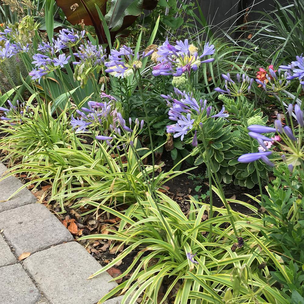 Tropical Perennials Plants Garden Flowers The Home Depot