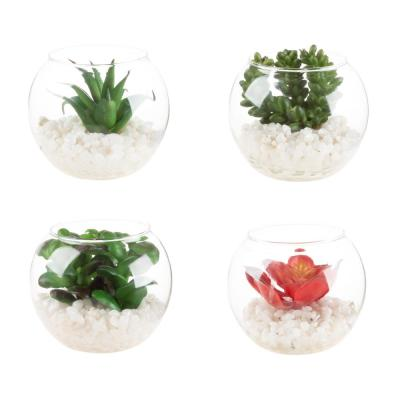 Assorted Mini Faux Succulents in Glass Vases (Set of 4)