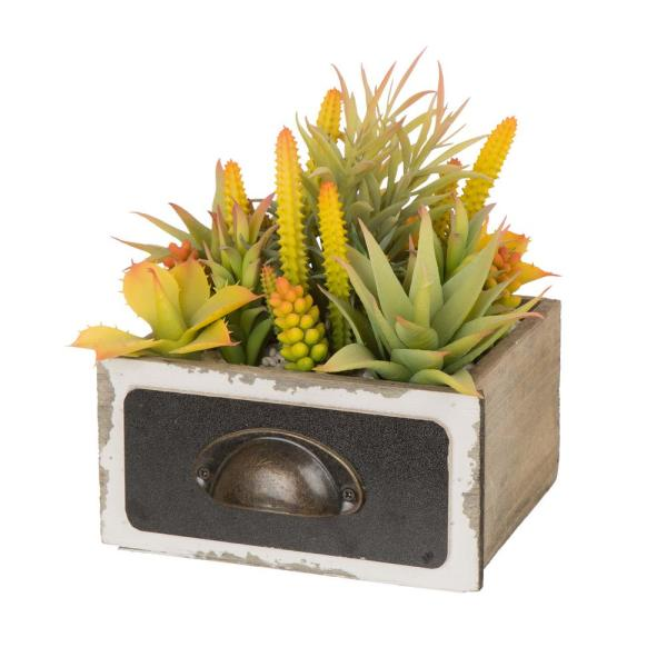 6.25 in. H Succulent Plants in Wooden Box