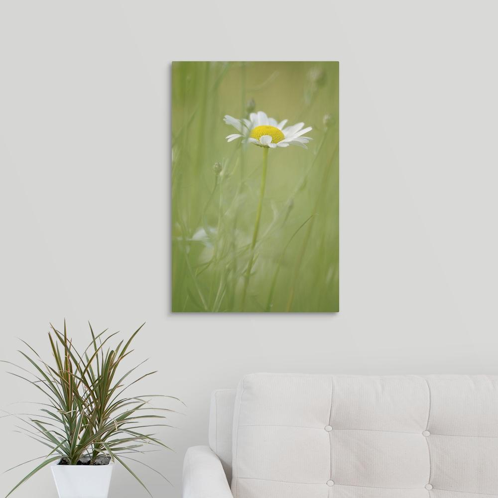 """White Daisy Blowing in Green Field Grass"" by Mike Moats Canvas"