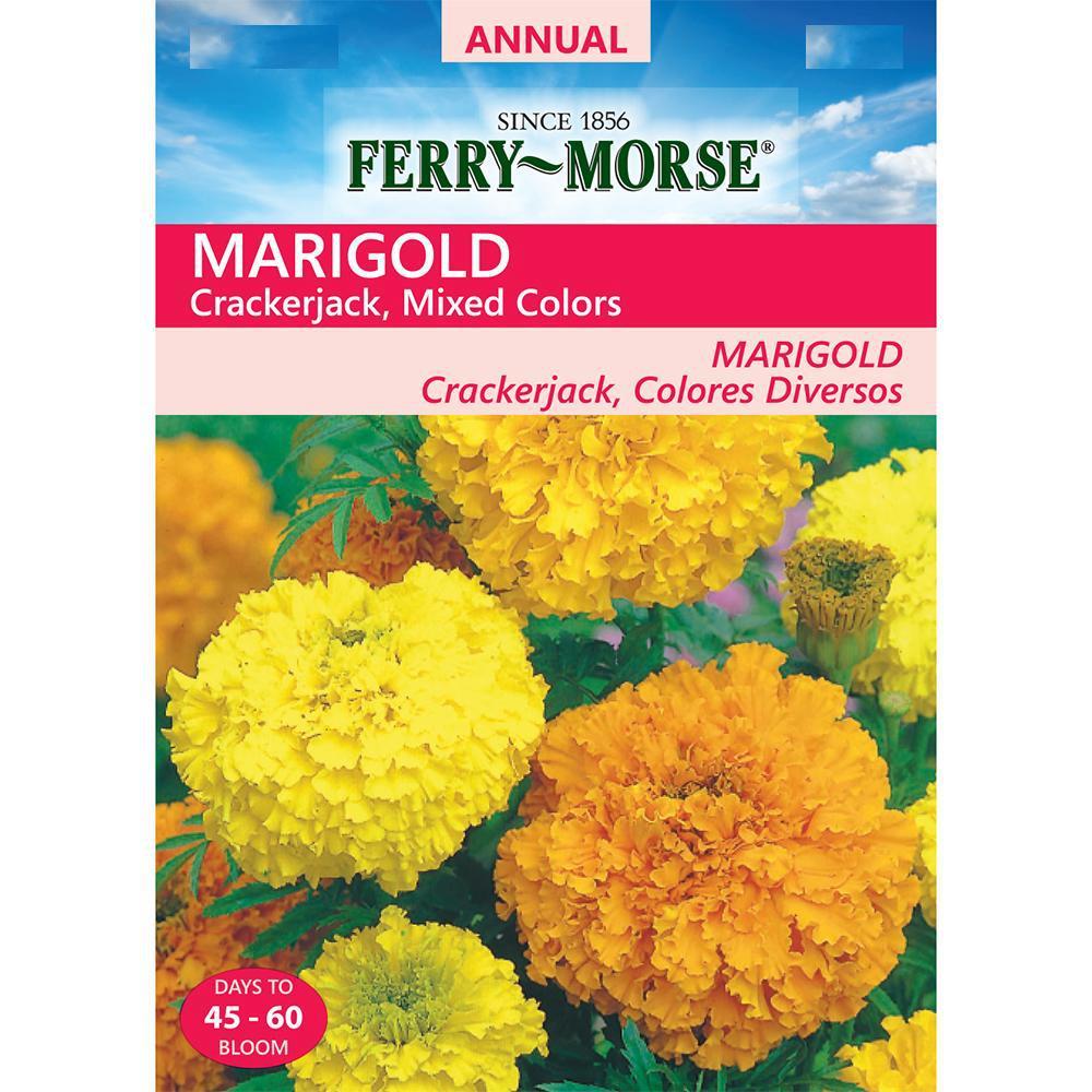 Marigold Crackerjack Mixed Colors Seed