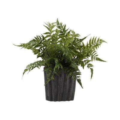 Indoor Small Leather Leaf Fern in Oval Ceramic